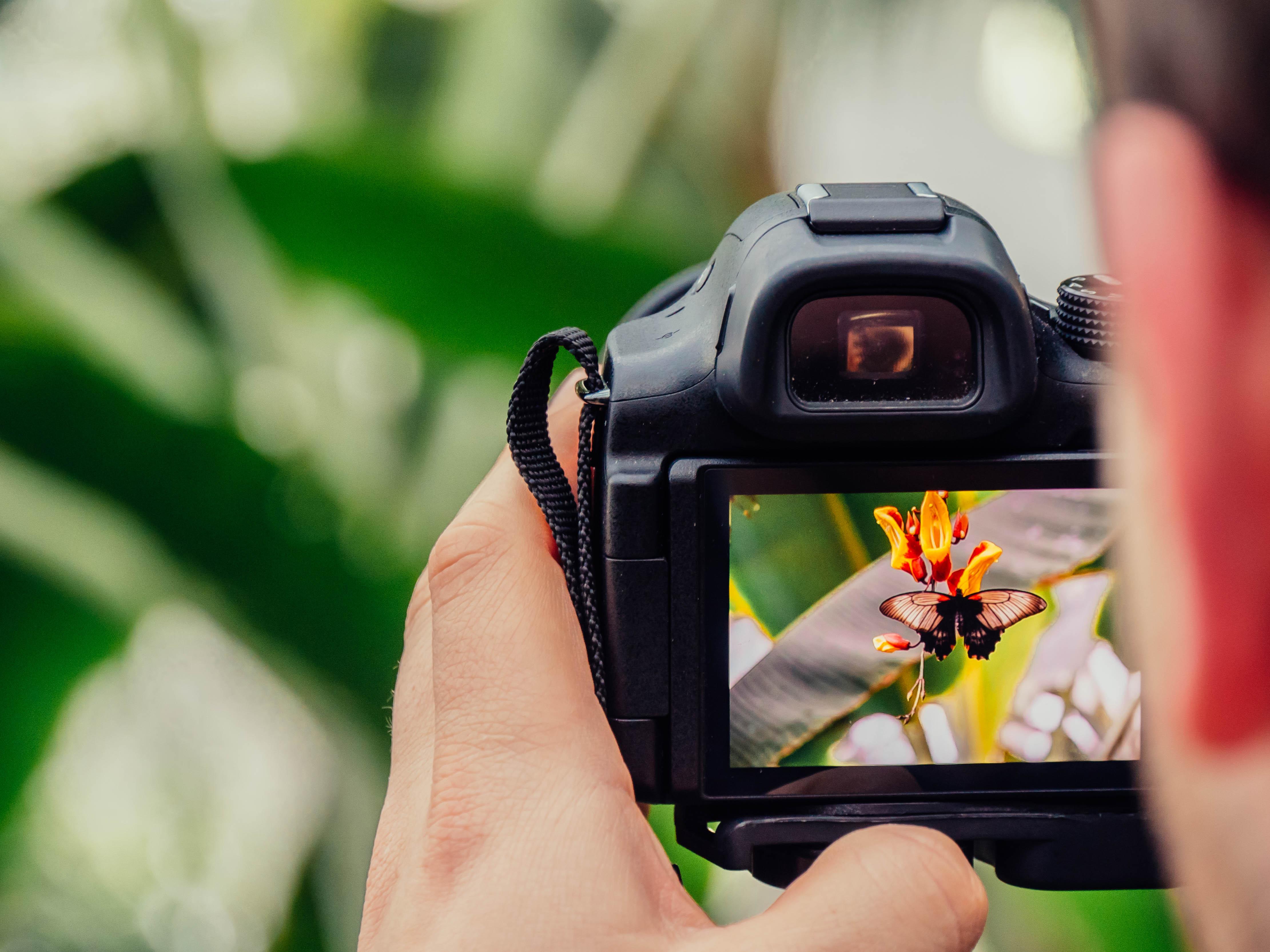 canon camera tutorial free