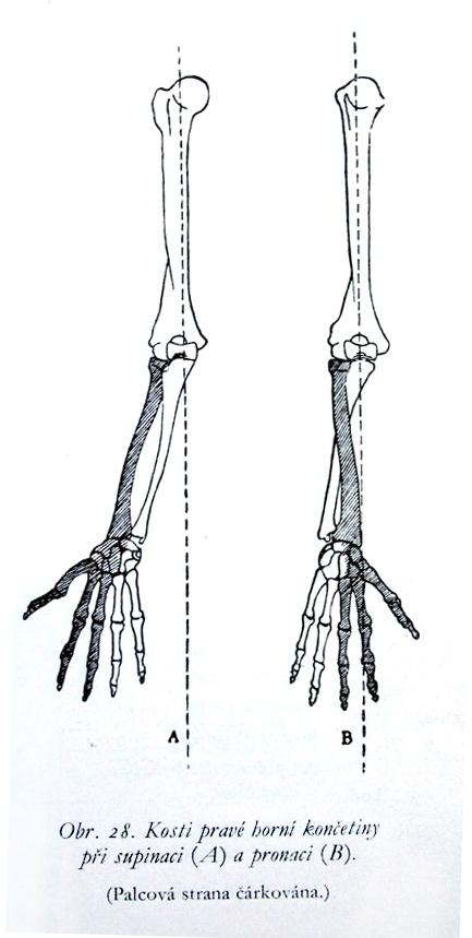 skeleton hand drawing tutorial